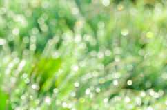 Defocused green grass background Royalty Free Stock Photos