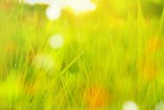 Defocused green grass in morning light spring background Stock Photo