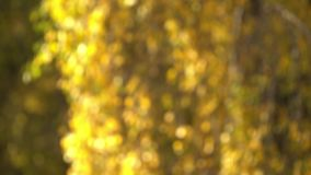 Defocused Herbstlaub stock footage