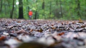 Defocused jogger bieg przez lasu w jesieni zdjęcie wideo