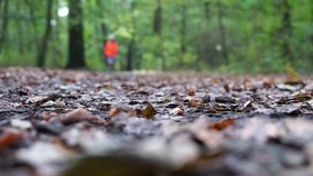 Defocused jogger running through forest in autumn stock video footage