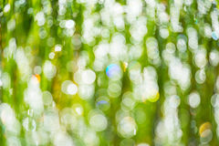 Defocused morning dew on the grass. Bokeh background. Lightbulb background Royalty Free Stock Images