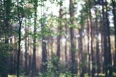 Defocused natura krajobraz Z ostrość wizerunku zielony las Zdjęcia Royalty Free