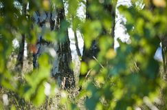 Defocused natural green tree background with sun beams. Abstraction. Bokeh. stock photography