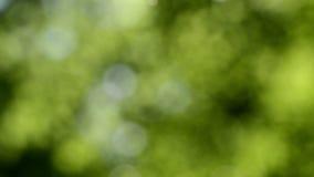Defocused nature background. Blurred leaf forest. stock video footage