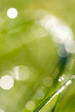 Defocused nature background with green grass Stock Image