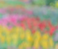 Defocused nature lights background. Defocused of colorful flowerbed background Royalty Free Stock Photography