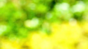 Defocused Naturhintergrund mit sonnenbeschienem Laub stock video