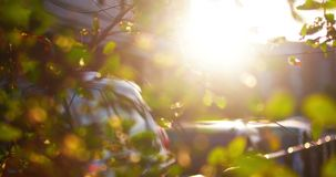 Defocused shot of elm tree leaves moving in the wind in front of parked car shot with sunflares. Warm sunset color stock footage