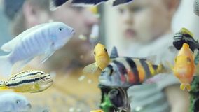 Defocused toddler with father watching focused fish in an aquarium at a zoo in slow motion. 1920x1080 stock video
