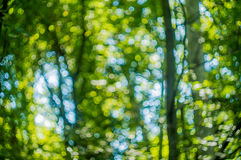 Defocused träd i skog med cirklar av ljus gör sammandrag backgro Arkivfoton