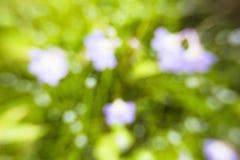 Defocused van purpere bloemen Royalty-vrije Stock Afbeeldingen