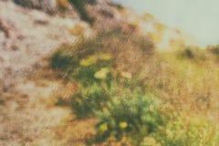 Defocused vintage nature background. Defocused soft vintage nature background Royalty Free Stock Image