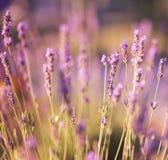 Defocused wild flower background Stock Photos