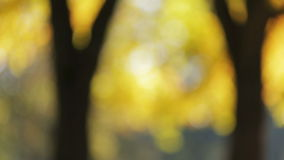 Defocusedachtergrond met esdoornbomen stock videobeelden