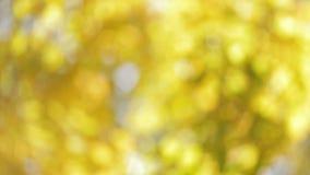 Defocusedachtergrond met esdoornbomen stock video