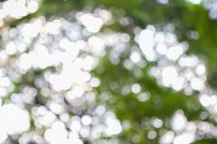 Defocusedbladeren tegen hemel Stock Afbeelding