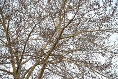 Defoliated gałąź jako tło zdjęcia stock