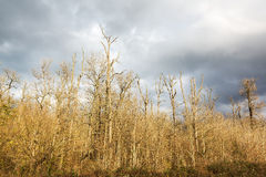 Defoliated and leafless trees. View from below stock photography