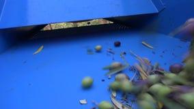 Defoliation των ελιών (1) απόθεμα βίντεο