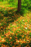 Defoliation Royalty Free Stock Photo