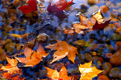 Defoliation. This is a clear autumn leaves fall on the lake Stock Photos