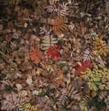 The defoliation in autumn. On autumn in Se Se, all over the floor withered Huang's defoliation, but don't lack vitality stubborn green plant among them, still Royalty Free Stock Photo