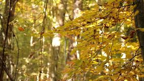 Defoliation in the forest stock video footage