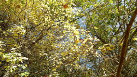 Defoliation view from the ground stock footage