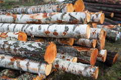 Deforesation 免版税库存照片