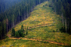 Deforest. In Parang Mountains, Romania Royalty Free Stock Images