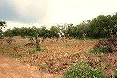 Deforest in thailand. The environmental disease problem in deforest for agriculture in thailand Stock Photos