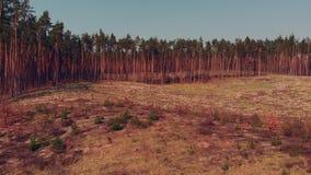 deforestated区域移动式摄影车幻灯片在木头的 股票录像