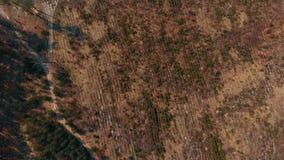deforestated区域顶视图  股票视频