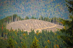 A deforestated hilltop. A hilltop left without the forest that was once covering its peak Royalty Free Stock Photo