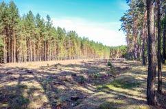 Deforestated skog i mitt av en skog Royaltyfri Fotografi