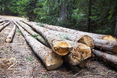 deforestation Árboles de Cutted en el lado del camino forestal fotos de archivo libres de regalías