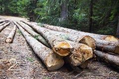 deforestation Árvores de Cutted no lado da estrada de floresta fotos de stock royalty free