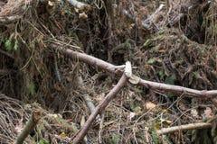 deforestation Fotos de archivo libres de regalías