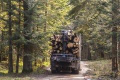 deforestation fotografía de archivo