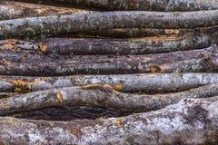 deforestation imagen de archivo libre de regalías