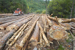 Deforestation Royalty Free Stock Photos