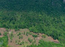 deforestation foto de archivo