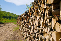 Deforestation. Massive wood pile as a result of deforestation Stock Photography