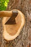 Deforestation. Disturbance principle of deforestation rigorously penalize state Royalty Free Stock Photos