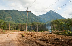 Deforestation. On progress to the deforestation is occurring Stock Photography