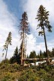 Deforestation Stock Photos
