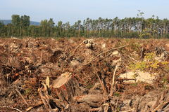 deforestation Arkivfoto
