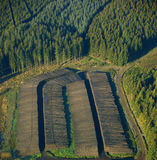 Deforestation. In europe (north eiffel in germany Royalty Free Stock Photo