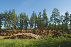 Deforestation. Destruction forests death green human activities Stock Image